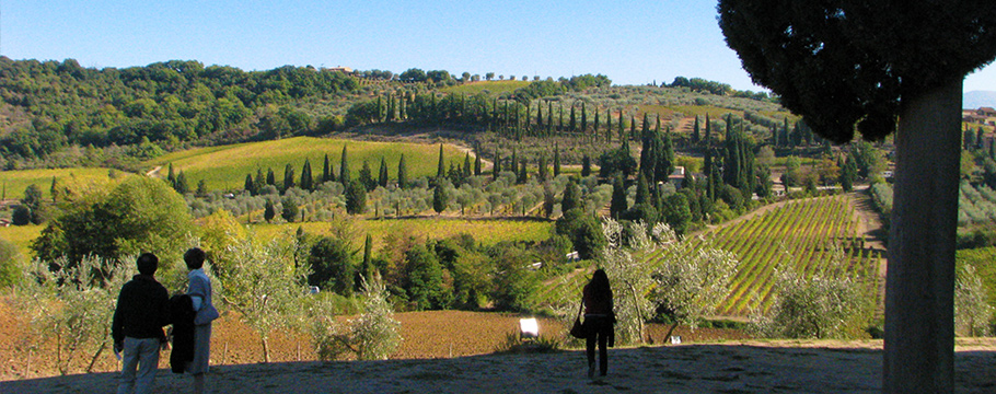 Vineyards and olive farms in Val d'Orcia