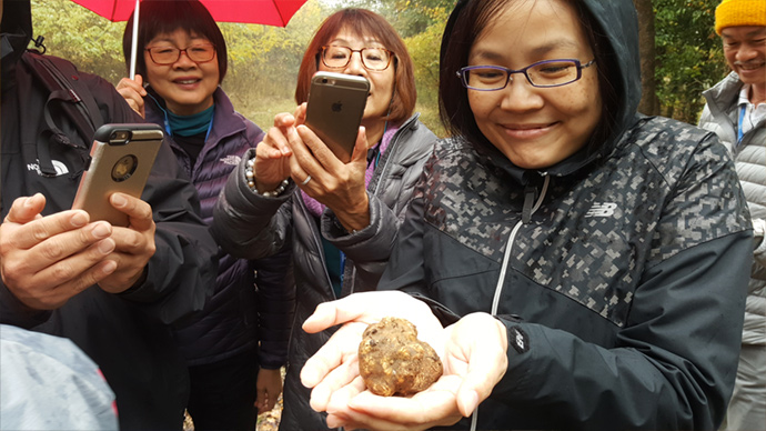 Truffle hunt demonstration in the Langhe wine country