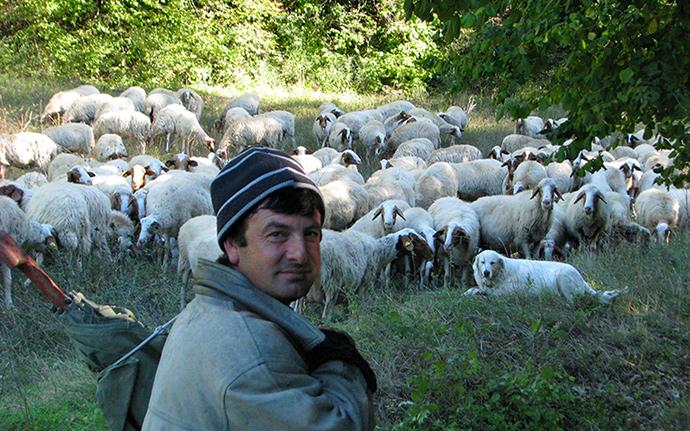 Umbria shepherd